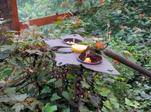 17 Butterfly and Hummingbird Food 2